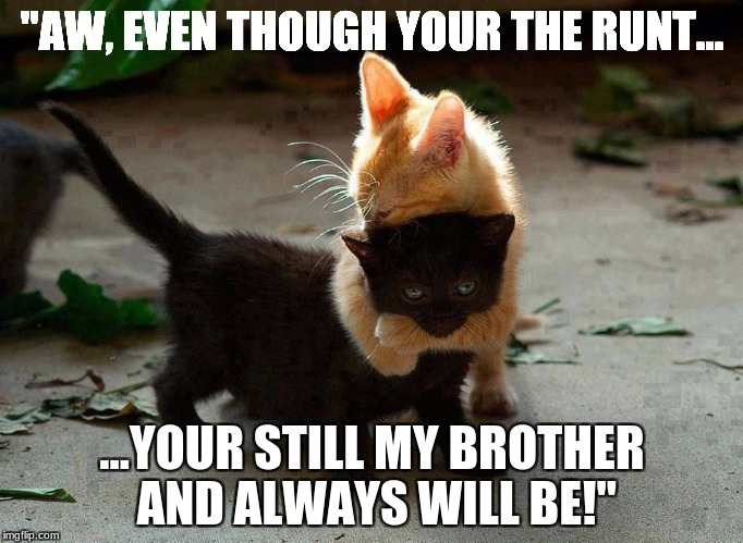 "kitten hug | ""AW, EVEN THOUGH YOUR THE RUNT... ...YOUR STILL MY BROTHER AND ALWAYS WILL BE!"" 