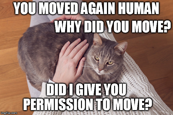 YOU MOVED AGAIN HUMAN DID I GIVE YOU PERMISSION TO MOVE? WHY DID YOU MOVE? | made w/ Imgflip meme maker
