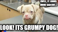 (WELL, IT LOOKS MORE SAD BUT..); LOOK! ITS GRUMPY DOG! | image tagged in grumpy dog | made w/ Imgflip meme maker
