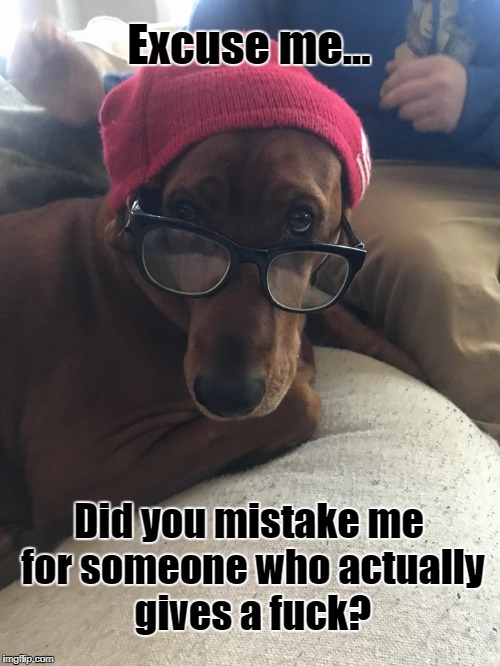 Excuse me... Did you mistake me for someone who actually gives a f**k? | image tagged in give a fuck,i don't give a fuck,funny dogs,dogs,smart dog | made w/ Imgflip meme maker