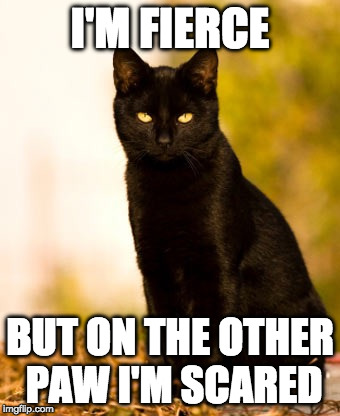 I'M FIERCE BUT ON THE OTHER PAW I'M SCARED | image tagged in black cat sitting | made w/ Imgflip meme maker