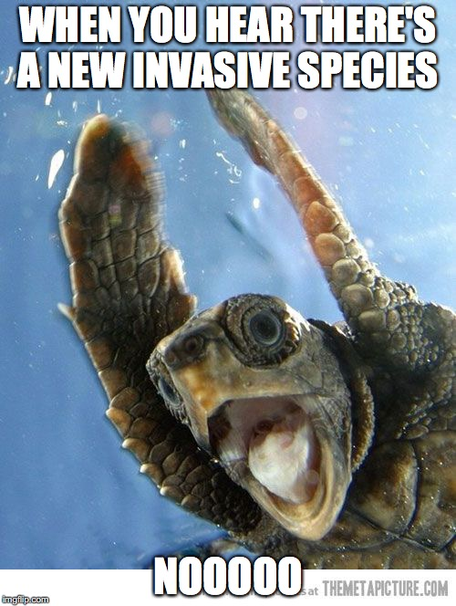 WHEN YOU HEAR THERE'S A NEW INVASIVE SPECIES NOOOOO | image tagged in shook turt | made w/ Imgflip meme maker