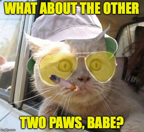 WHAT ABOUT THE OTHER TWO PAWS, BABE? | made w/ Imgflip meme maker