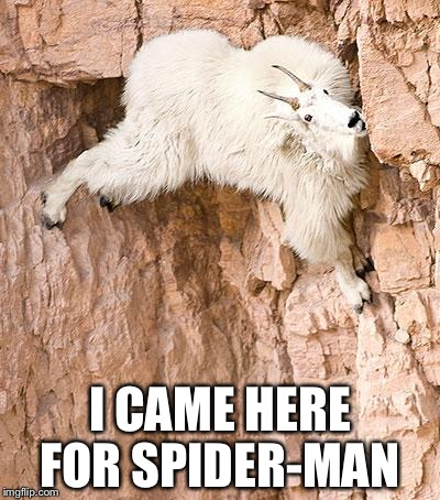Spider goat  | I CAME HERE FOR SPIDER-MAN | image tagged in mountain goat | made w/ Imgflip meme maker