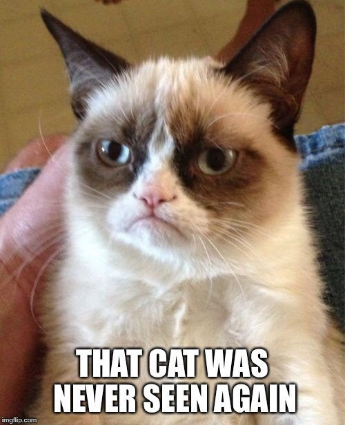 Grumpy Cat Meme | THAT CAT WAS NEVER SEEN AGAIN | image tagged in memes,grumpy cat | made w/ Imgflip meme maker