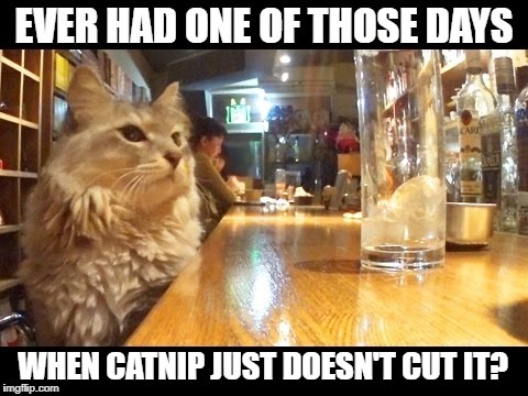 Bartender, Better Make It A Double | . | image tagged in memes,meme,cat,cats,bartender,bad day | made w/ Imgflip meme maker