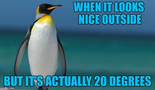 WHEN IT LOOKS NICE OUTSIDE BUT IT'S ACTUALLY 20 DEGREES | image tagged in penguin clear blue water,americanpenguin | made w/ Imgflip meme maker