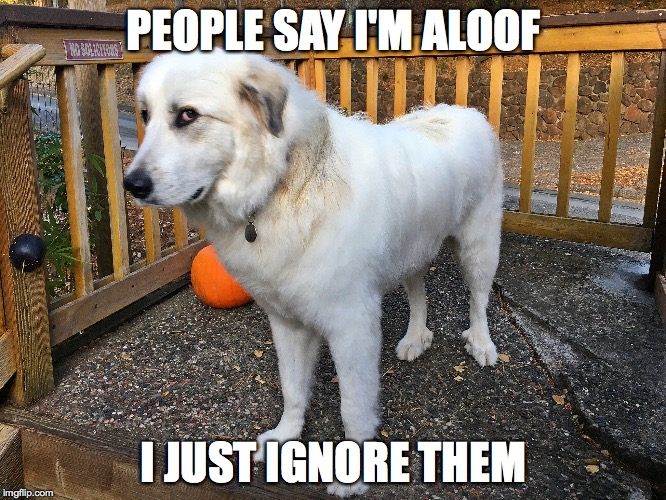 PEOPLE SAY I'M ALOOF I JUST IGNORE THEM | image tagged in kona | made w/ Imgflip meme maker