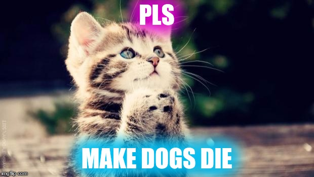 Praying cat | PLS MAKE DOGS DIE | image tagged in praying cat | made w/ Imgflip meme maker