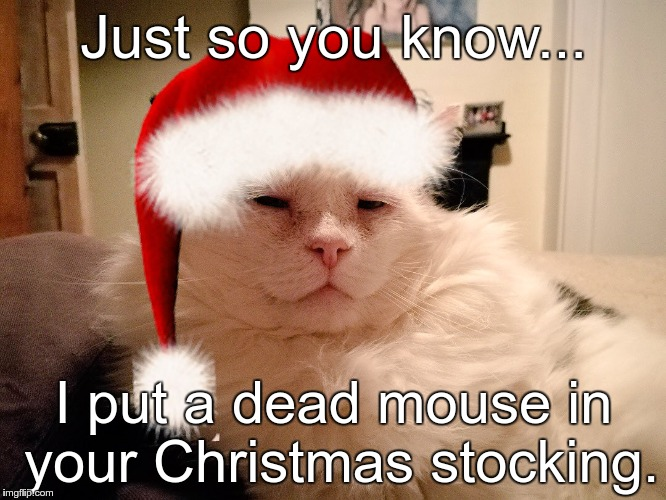 Just so you know... I put a dead mouse in your Christmas stocking. | image tagged in cat with red christmas hat | made w/ Imgflip meme maker