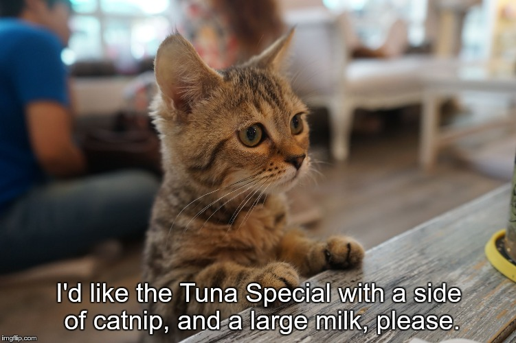 I'd like the Tuna Special with a side of catnip, and a large milk, please. | image tagged in kitten at counter cat cafe bangkok thailand | made w/ Imgflip meme maker