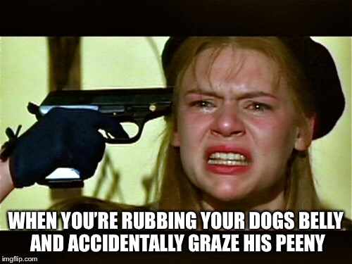 WHEN YOU'RE RUBBING YOUR DOGS BELLY AND ACCIDENTALLY GRAZE HIS PEENY | image tagged in dogs,penis,pets,funny,funny memes,comedy | made w/ Imgflip meme maker