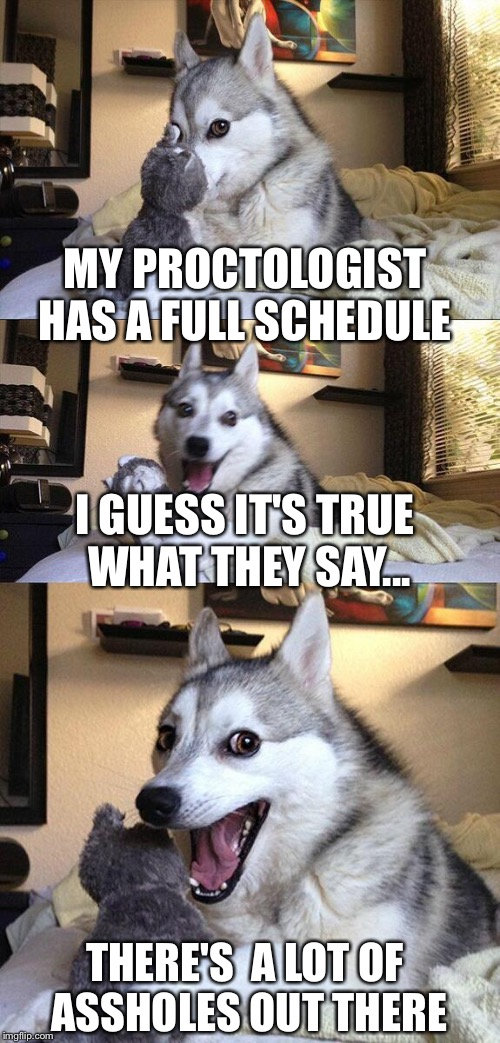 Bad Pun Dog Meme | MY PROCTOLOGIST HAS A FULL SCHEDULE THERE'S  A LOT OF ASSHOLES OUT THERE I GUESS IT'S TRUE WHAT THEY SAY... | image tagged in memes,bad pun dog | made w/ Imgflip meme maker