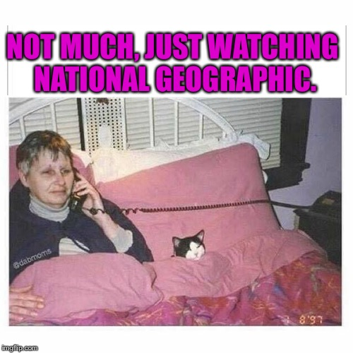 My doggie, watching hockey. | NOT MUCH, JUST WATCHING NATIONAL GEOGRAPHIC. | image tagged in memes,cats,lady | made w/ Imgflip meme maker