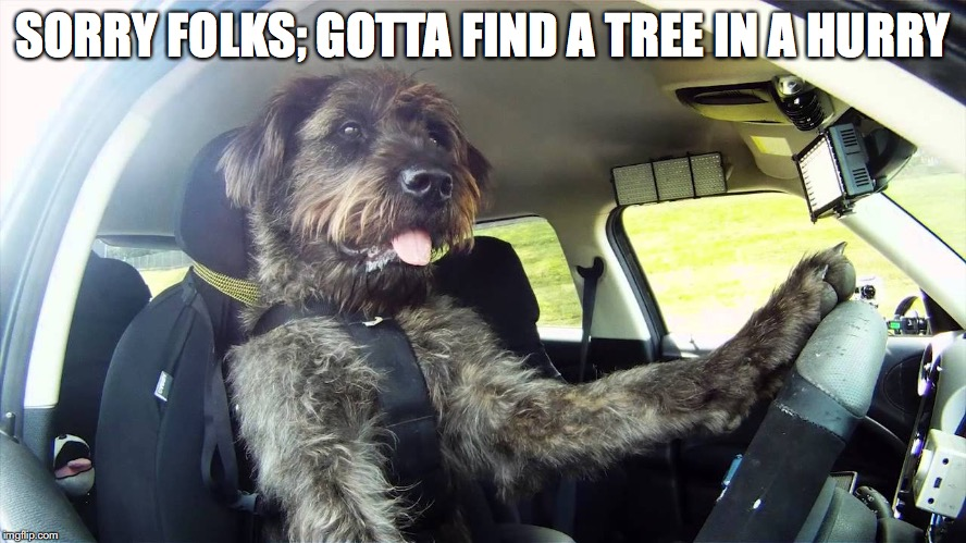 SORRY FOLKS; GOTTA FIND A TREE IN A HURRY | made w/ Imgflip meme maker