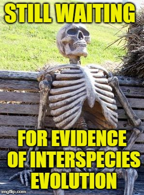 Waiting Skeleton Meme | STILL WAITING FOR EVIDENCE OF INTERSPECIES EVOLUTION | image tagged in memes,waiting skeleton | made w/ Imgflip meme maker