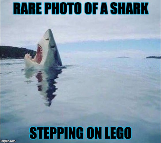 sharkVlego | RARE PHOTO OF A SHARK STEPPING ON LEGO | image tagged in funny,shark,lego | made w/ Imgflip meme maker