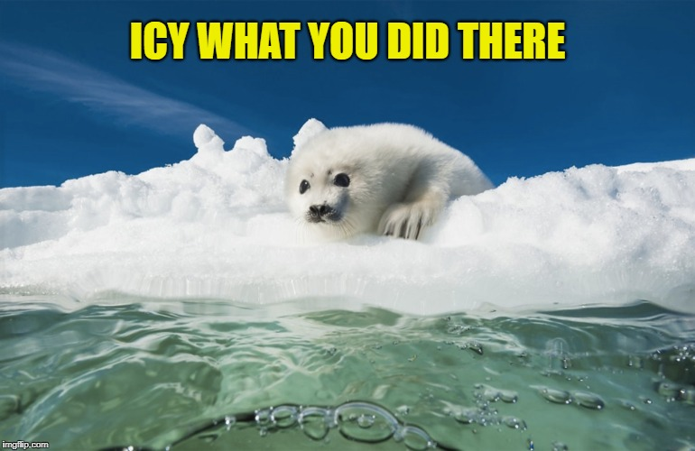 Icy What You Did There Seal | ICY WHAT YOU DID THERE | image tagged in memes,meme,i see what you did there,seal | made w/ Imgflip meme maker