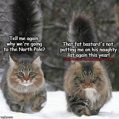 Tell me again why we're going to the North Pole? Crazy B**ches You Know Who You Are That fat bastard's not putting me on his naughty list ag | image tagged in cats,christmas | made w/ Imgflip meme maker