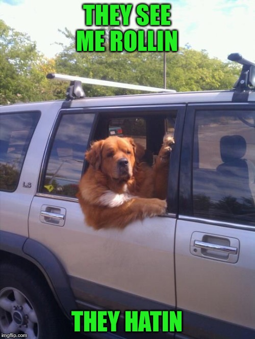 dog in a car | THEY SEE ME ROLLIN THEY HATIN | image tagged in dog in a car | made w/ Imgflip meme maker
