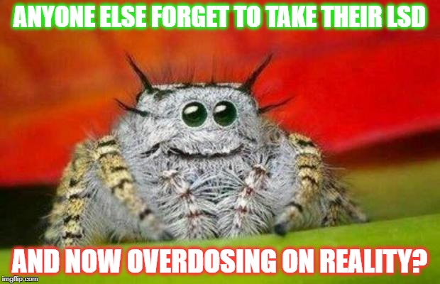 ANYONE ELSE FORGET TO TAKE THEIR LSD AND NOW OVERDOSING ON REALITY? | image tagged in misunderstood spider | made w/ Imgflip meme maker