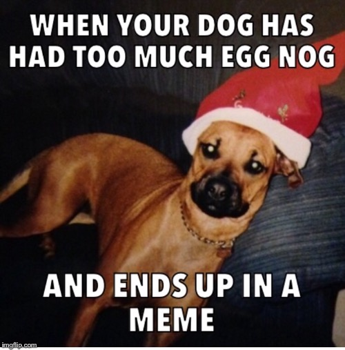 Christmas party dog | A | image tagged in funny dog | made w/ Imgflip meme maker
