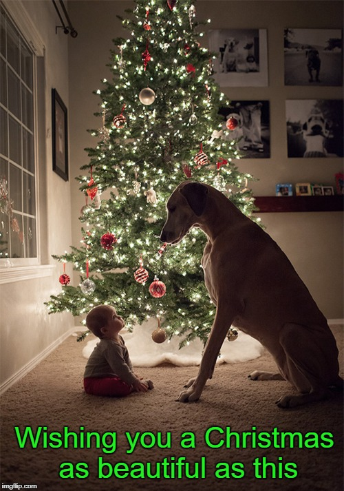 Merry Christmas | Wishing you a Christmas as beautiful as this | image tagged in christmas,merry christmas,cute dog,cute baby | made w/ Imgflip meme maker