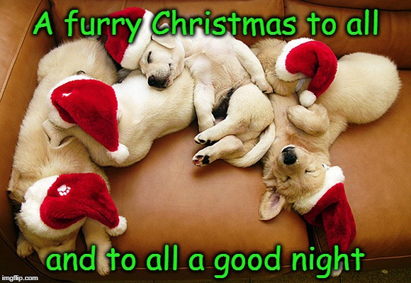 Furry Christmas To All | A furry Christmas to all and to all a good night | image tagged in christmas,merry christmas,cute dogs,cute puppies,puppies | made w/ Imgflip meme maker