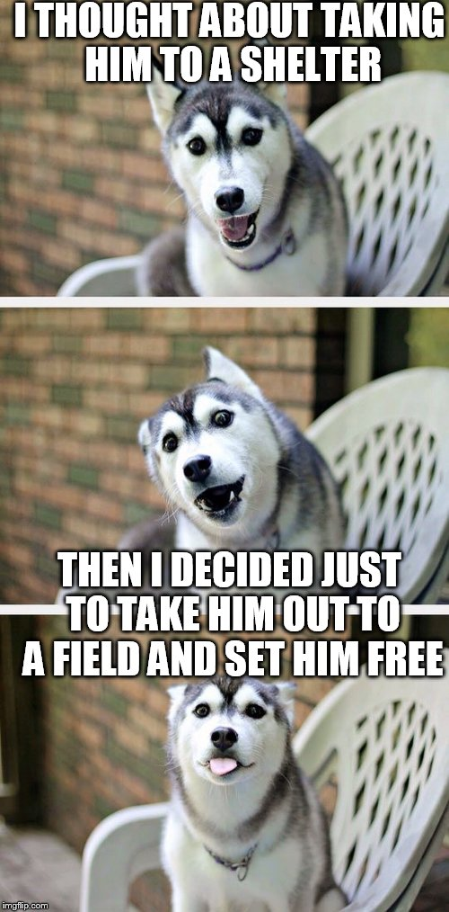 I THOUGHT ABOUT TAKING HIM TO A SHELTER THEN I DECIDED JUST TO TAKE HIM OUT TO A FIELD AND SET HIM FREE | made w/ Imgflip meme maker