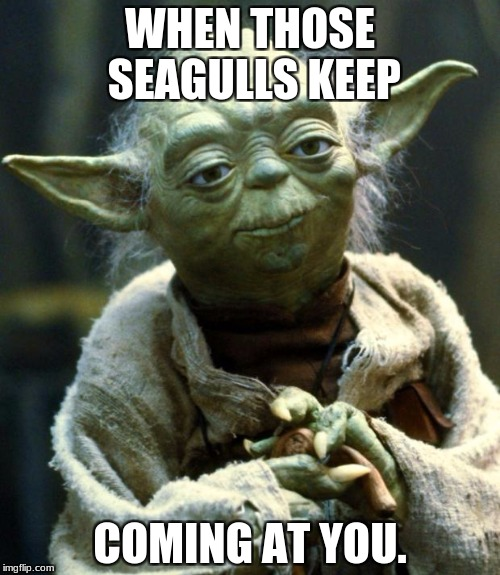 Star Wars Yoda Meme | WHEN THOSE SEAGULLS KEEP COMING AT YOU. | image tagged in memes,star wars yoda | made w/ Imgflip meme maker