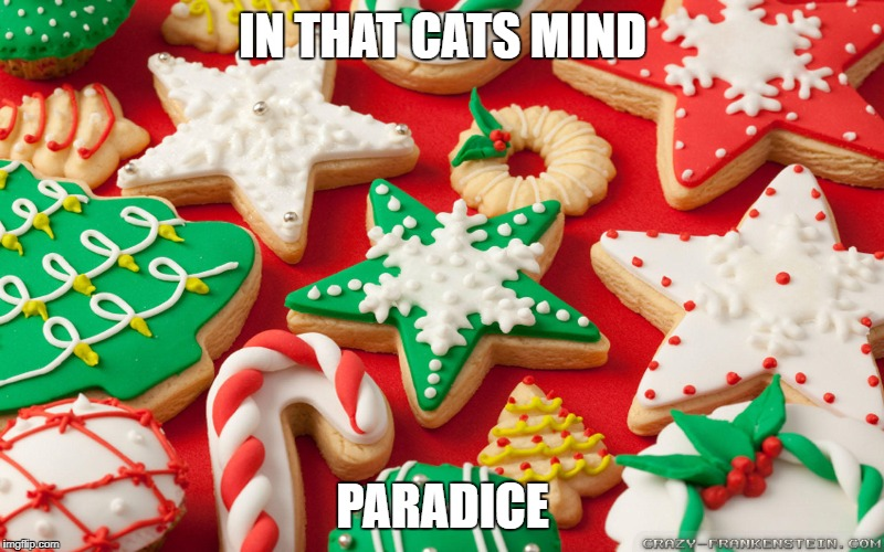 IN THAT CATS MIND PARADICE | made w/ Imgflip meme maker