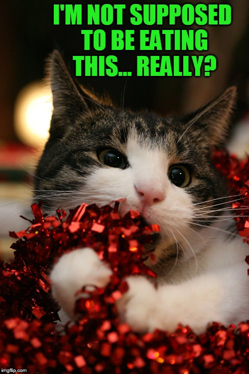 Cat Question at Christmas | I'M NOT SUPPOSED TO BE EATING THIS... REALLY? | image tagged in memes,cat,eating,christmas decorations,don't do it,really | made w/ Imgflip meme maker
