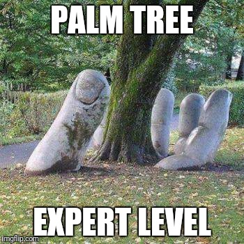 Palm tree | PALM TREE EXPERT LEVEL | image tagged in funny tree,expert level,palm tree | made w/ Imgflip meme maker