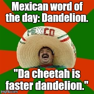 "succesful mexican | Mexican word of the day: Dandelion. ""Da cheetah is faster dandelion."" 