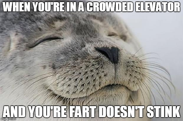 Satisfied Seal Meme | WHEN YOU'RE IN A CROWDED ELEVATOR AND YOU'RE FART DOESN'T STINK | image tagged in memes,satisfied seal | made w/ Imgflip meme maker