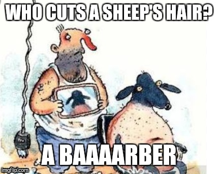 Hairdresser for the sheep | WHO CUTS A SHEEP'S HAIR? A BAAAARBER | image tagged in jokes,dad joke,dad joke meme,fashion,animals,sheep | made w/ Imgflip meme maker