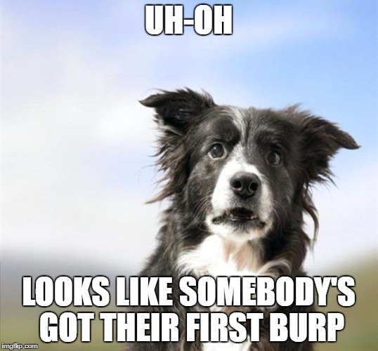 UH-OH LOOKS LIKE SOMEBODY'S GOT THEIR FIRST BURP | image tagged in surprised border collie,first burp,border collie,dogs,border collies,surprised dog | made w/ Imgflip meme maker
