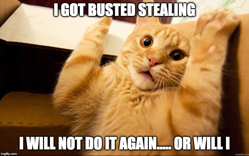 I GOT BUSTED STEALING I WILL NOT DO IT AGAIN..... OR WILL I | image tagged in cat being busted stealing | made w/ Imgflip meme maker
