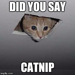 Ceiling Cat | DID YOU SAY CATNIP | image tagged in memes,ceiling cat | made w/ Imgflip meme maker