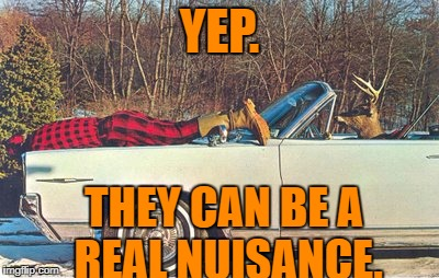 YEP. THEY CAN BE A REAL NUISANCE. | made w/ Imgflip meme maker