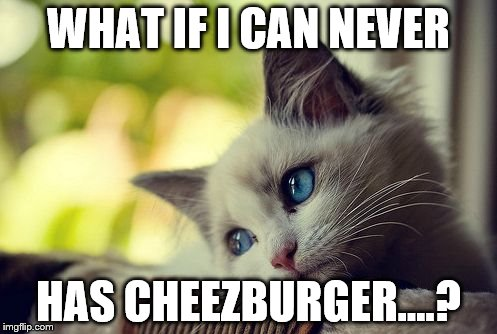 First World Problems Cat | WHAT IF I CAN NEVER HAS CHEEZBURGER....? | image tagged in memes,first world problems cat | made w/ Imgflip meme maker