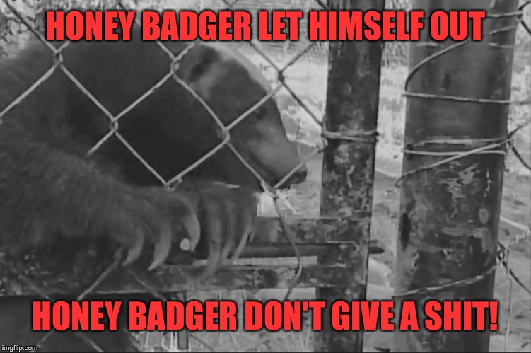 HONEY BADGER LET HIMSELF OUT HONEY BADGER DON'T GIVE A SHIT! | made w/ Imgflip meme maker