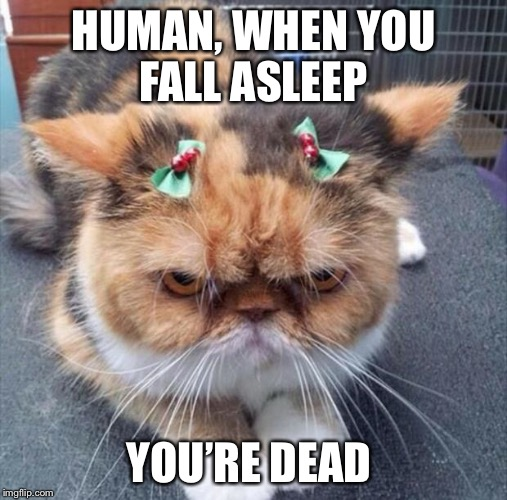 I did not authorize these fu@&%ng bows  | HUMAN, WHEN YOU FALL ASLEEP YOU'RE DEAD | image tagged in grumpy christmas cat,human,sleep,dead,not amused | made w/ Imgflip meme maker