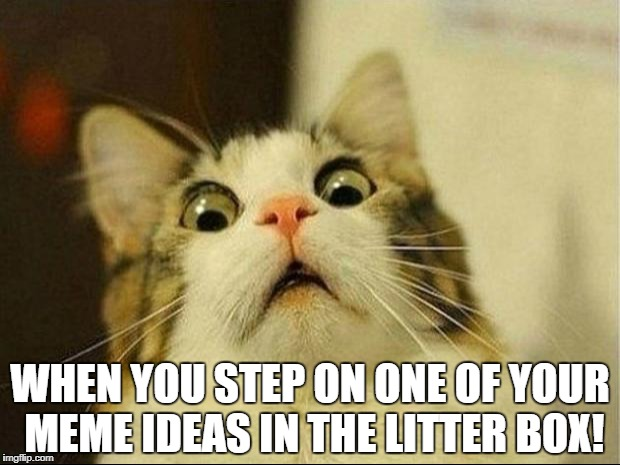 WHEN YOU STEP ON ONE OF YOUR MEME IDEAS IN THE LITTER BOX! | made w/ Imgflip meme maker