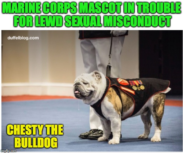 In Trouble for Sniffing, Licking, Humping Too Much | MARINE CORPS MASCOT IN TROUBLE FOR LEWD SEXUAL MISCONDUCT CHESTY THE BULLDOG | image tagged in marines,bulldogs,sexual harrassment,political correctness | made w/ Imgflip meme maker