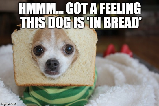 Purebred? | HMMM... GOT A FEELING THIS DOG IS 'IN BREAD' | image tagged in memes,meme,dog,dogs,inbred | made w/ Imgflip meme maker