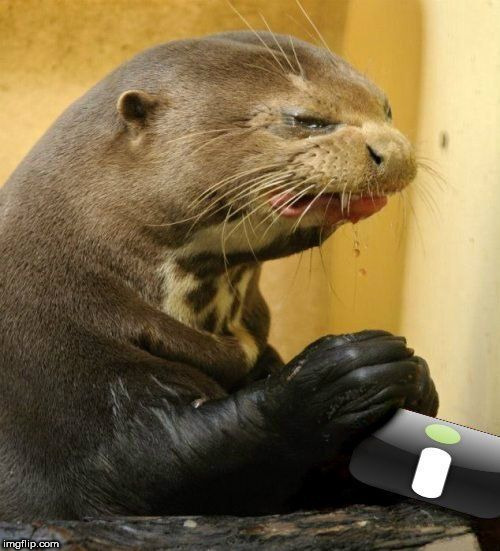 words of wisdom week- words are not needed here | image tagged in imgur,words of wisdom,otter,disgusted otter,disgusted,meme | made w/ Imgflip meme maker