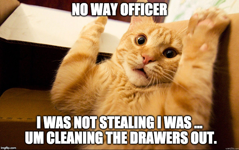 NO WAY OFFICER I WAS NOT STEALING I WAS ... UM CLEANING THE DRAWERS OUT. | image tagged in cat being busted stealing | made w/ Imgflip meme maker