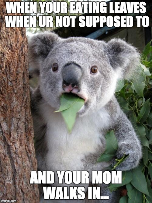 Surprised Koala Meme | WHEN YOUR EATING LEAVES WHEN UR NOT SUPPOSED TO AND YOUR MOM WALKS IN... | image tagged in memes,surprised koala | made w/ Imgflip meme maker