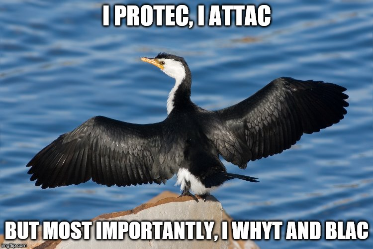 Duckguin | I PROTEC, I ATTAC BUT MOST IMPORTANTLY, I WHYT AND BLAC | image tagged in duckguin | made w/ Imgflip meme maker